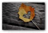 Autumn Heart Leave On Old Black Wood Photo Print
