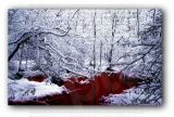 Bloody Winter Forest Photo Art Print